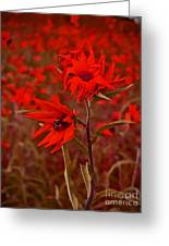 Red Red Wild Flowers Greeting Card