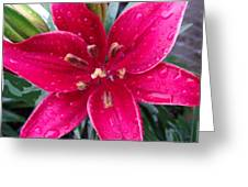 Red Refreshed Lily Greeting Card