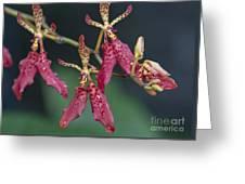 Red Renanthera John Losgar 2190 Greeting Card