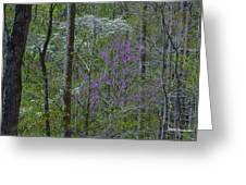Red River Gorge Spring  Greeting Card
