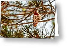 Red Rock Country Hummingbird Greeting Card
