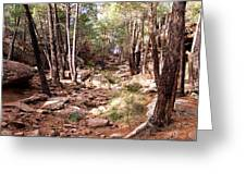 Red Rock Pine Forest Greeting Card