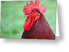 Red Rooster Portrait Greeting Card