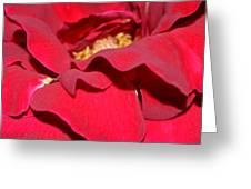 Crimson Blush 1.2 Greeting Card