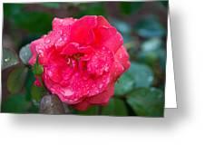 Savannah Ga Red Rose After A Rain Greeting Card