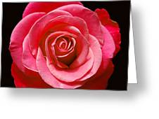 Red Rose On Black Greeting Card
