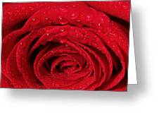 Red Rose And Water Drops Greeting Card