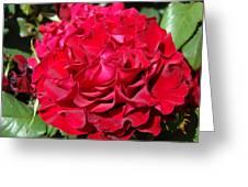 Red Rose Art Prints Big Roses Floral Greeting Card