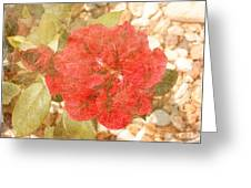 Red Rose At Noon Greeting Card