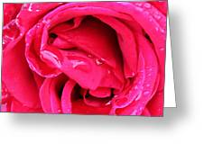 Rose And Water Drops Greeting Card