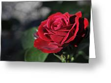Red Rose Dark Greeting Card by Roger Snyder