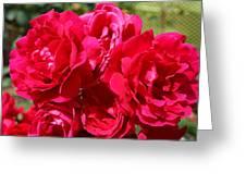 Red Rose Garden Art Prints Roses Greeting Card