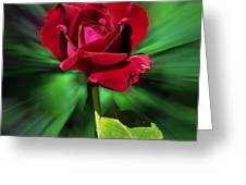 Red Rose Green Background Greeting Card