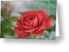 Red Rose II Greeting Card