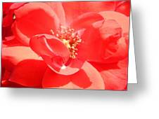 Red Rose In Full Bloom Greeting Card