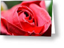 Red Rose Greeting Card by Ivelin Donchev