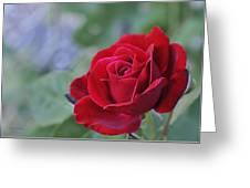 Red Rose Light Greeting Card by Roger Snyder