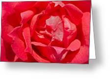 Red Rose Macro Greeting Card