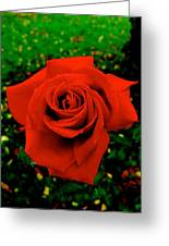 Red Rose On Green Greeting Card
