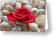 Red Rose On River Rocks 2 Greeting Card