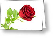 Red Rose On White Greeting Card