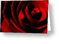 Red Rose Petals Greeting Card