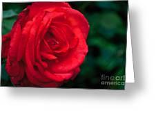Red Rose Profile Greeting Card