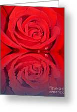 Red Rose Reflects Greeting Card