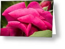 Red Rose Rising Greeting Card