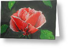 Red Rose Study Greeting Card