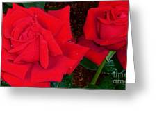 Red Rose Twins  Greeting Card