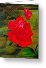 Red Rose With Bud Greeting Card