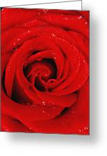 Red Rose With Water Drops Greeting Card