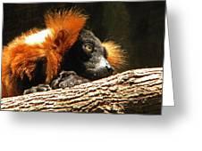 Red Ruffed Lemur Greeting Card