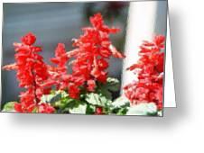 Red Salvia Brush Strokes Greeting Card