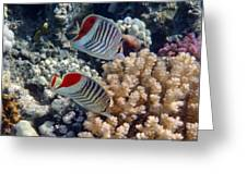Red Sea Beauty 5 Greeting Card