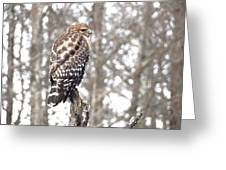 Red-shouldered Hawk Greeting Card