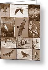 Red-shouldered Hawk Poster - Sepia Greeting Card