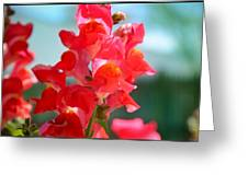 Red Snapdragons I Greeting Card by Aya Murrells