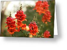 Red Snapdragons Greeting Card