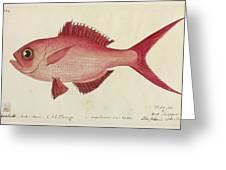 Red Snapper Fish Greeting Card