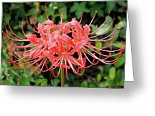 Red Spider Lily Greeting Card