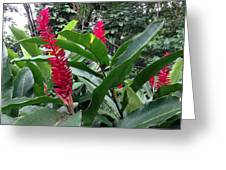 Red Spikes In St Lucia Greeting Card