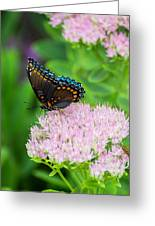 Red Spotted Admiral On Sedum - Vertical Greeting Card