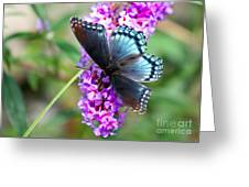 Red Spotted Purple Butterfly On Butterfly Bush Greeting Card