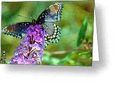 Red Spotted Purple Butterfly Photopainting Greeting Card