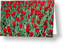 Red Spring Greeting Card