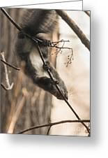 Red Squirrel - Balance Greeting Card