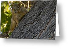 Red Squirrel   #1733 Greeting Card