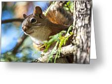 Red Squirrel In The Sun Greeting Card